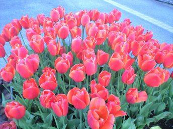 花回廊の花